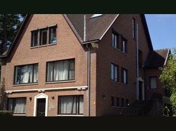 EasyKot EK - nieuw studentenhuis HOTSPOT in Genk, Genk - € 280 p.m.