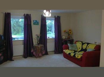 EasyRoommate UK - Room Available, Carlisle - £320 pcm