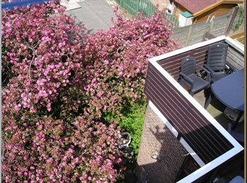 EasyKamer NL - Furnished rooms and more for rent, Schiedam - € 299 p.m.