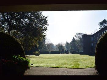 EasyRoommate UK - Quiet double room in beautiful garden flat, Petersham - £800 pcm