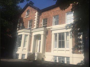 EasyRoommate UK - Large spacious bright room near to Lark Lane, Dingle - £400 pcm