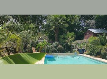 EasyRoommate US - Palm Tree Paradise, Bossier City - $550 pm
