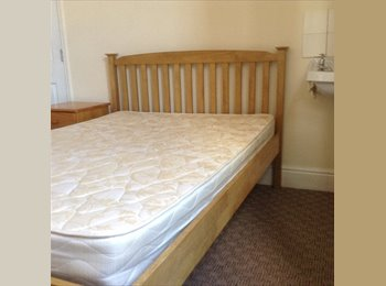 EasyRoommate UK - Room to let in hated house , Exeter - £380 pcm