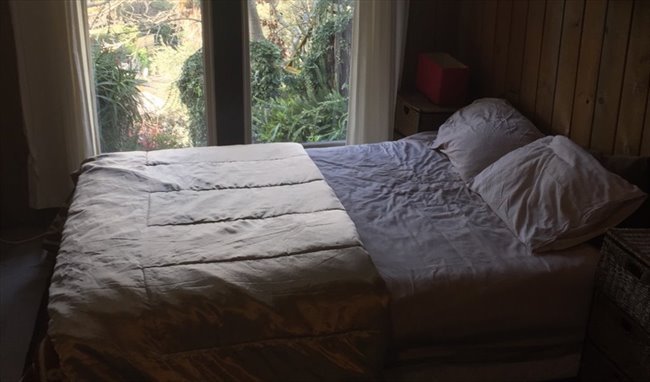 Room to rent in Sealy Road, Napier - Furnished room Napier Hill close to town . - Image 1